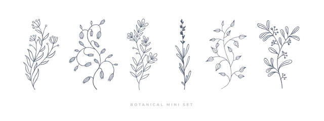 Set hand drawn curly grass and flowers on white isolated background. Botanical illustration. Decorative floral picture.