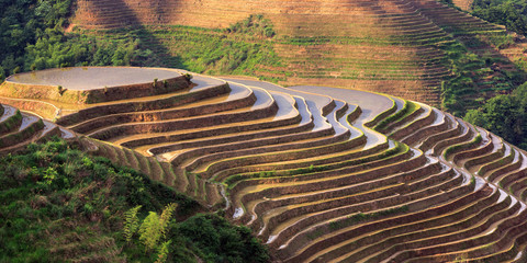 Longsheng Rice Terraces, Longji Rice Terrace (Dragons Backbone) in Longsheng County - Guangxi Province, China. Layered Irrigated Terraces filled with water, new seasonal crop. Chinese Landscape