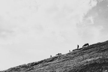 Men with horses walking down the mountain trail