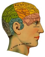 Phrenological Head