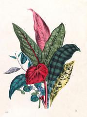 Patterned Foliage, 1860