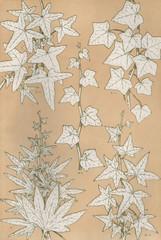 Owen Jones Flowers 93