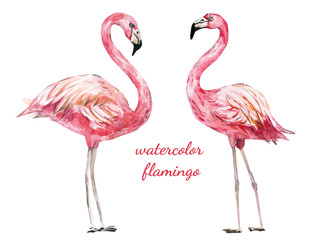 hand painted watercolor flamingo