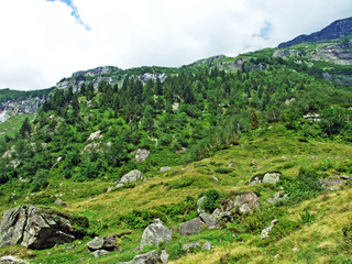 Trees and mixed forests in the Maderanertal alpine valley - Canton of Uri, Switzerland