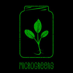 Microgreens Logo. Plant in a glass jar. Grunge effect. Black background. Seed and living microgreens packaging design.