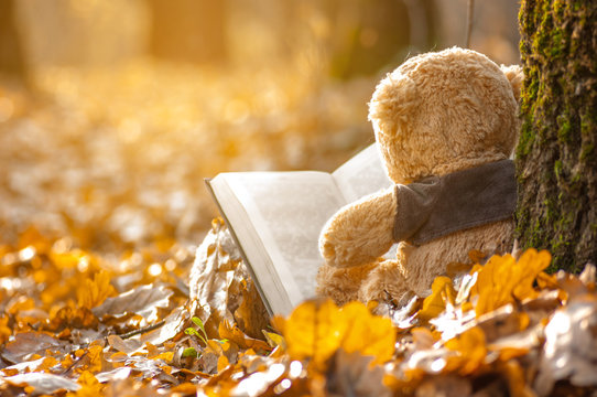 the grandfather sits back on fallen autumn leaves near a tree and read a book