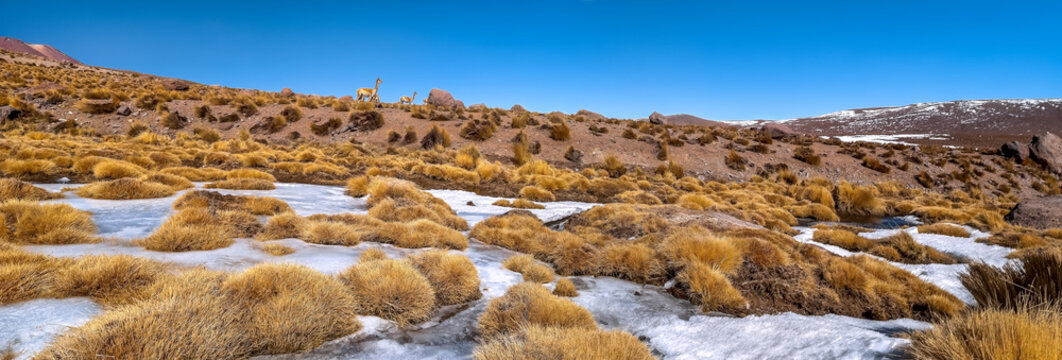 Andean landscape with lamas