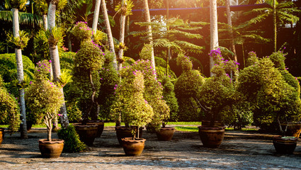 Garden Poster Brown Luxury landscape design of the tropical garden. Beautiful view of tropical landscape