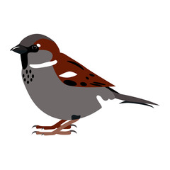 Sparrow. Simple color vector illustration isolated on white.
