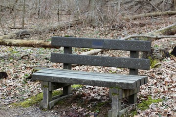 A close view of the old wood park bench in the forest.