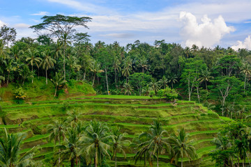 Ubud Bali, the Tegalalang Rice Terraces