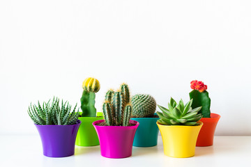 Various flowering cactus and succulent plants in bright colorful flower pots against white wall. House plants on white shelf with copy space.