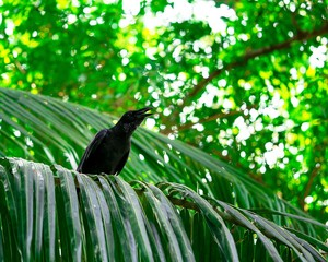 Single crow on the branch looking at tree