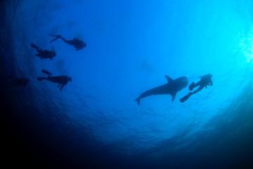 Scuba dive with whale shark