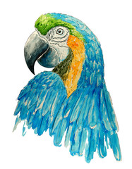 Watercolor parrot. Bright tropical  bird. T-shirt graphics. Watercolor textured macaw. Handmade drawn  background