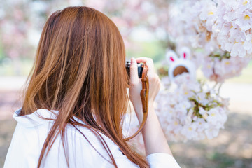 spring season with full bloom pink flower travel concept from beauty asian woman enjoy taking photo and sight seeing sakura or cherry blossom with soft focus background
