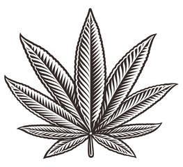 Vector illustration of a cannabis leaf.