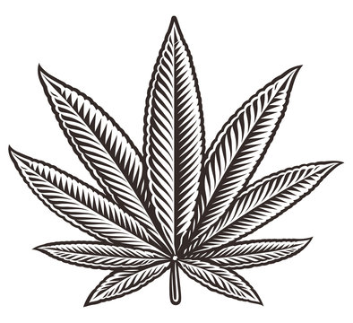 Vector illustration of a cannabis leaf.
