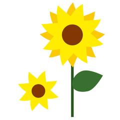 sunflower flat simple illustration