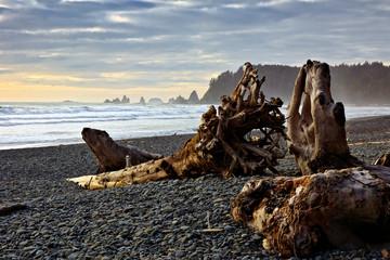 Fototapete - Driftwood at Rialto Beach near sunset, Olympic National Park, Washington, USA