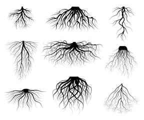 Silhouette Black Tree Roots Various Types Shapes Set. Vector