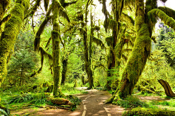 Path through moss covered trees in Hoh Rain Forest, Olympic National Park, Washington, USA Wall mural