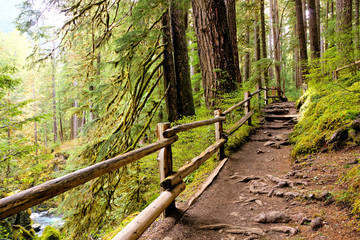 Trail with wooden fence through the old growth evergreen forests in Olympic National Park, Washington, USA