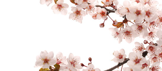 Blooming spring flowers frame isolated on white background, clipping path