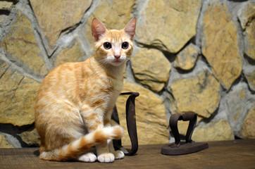Gato tabby naranja posado en banco de madera con pared de piedra al fondo y antiguedades