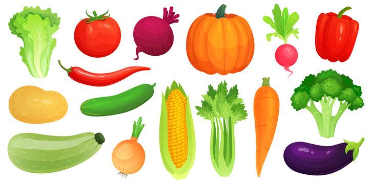 Cartoon vegetables. Fresh vegan veggies, raw vegetable green zucchini and celery. Lettuce, tomato and carrot vector illustration set
