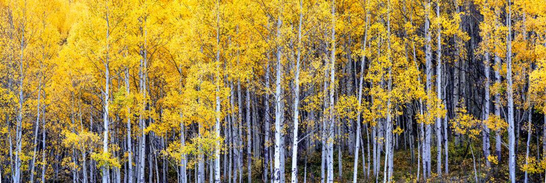 Autumn Aspen scenery on the Million Dollar Highway - Colorado Rocky Mountains