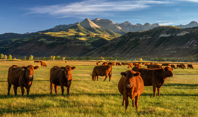 Autumn at a cattle ranch in Colorado near Ridgway - County Road 12