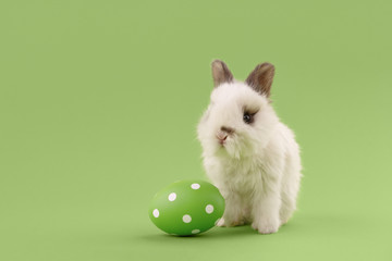 White baby bunny rabbit with green painted polka-dotted egg on green background. Easter holiday concept. Wall mural