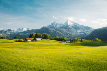 Foto op Aluminium Oranje Idyllic landscape in the Alps with blooming meadows in springtime