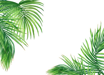 Mockup of tropical green coconut palm leaves. Watercolor hand drawn painting illustration isolated on a white background.