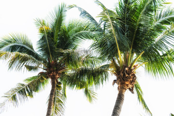 Summer vacation with coconut palm trees background.
