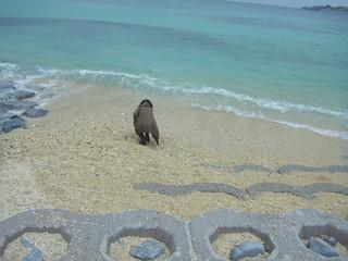 DAVIDE in Okinawa 2012