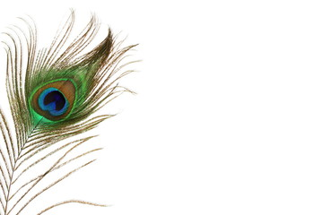 Fotobehang Pauw peacock feather in white background with text copy space