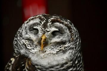 梟〜Owl