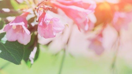 Beautiful floral spring abstract background of nature. Branches of blossoming flower macro soft focus cute background Easter and spring spa greeting cards, copy space Spring morning pink flowers tree