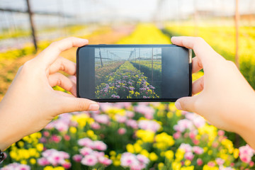 close up hand of women taking photo with smartphone of beautiful flower in soft focus background
