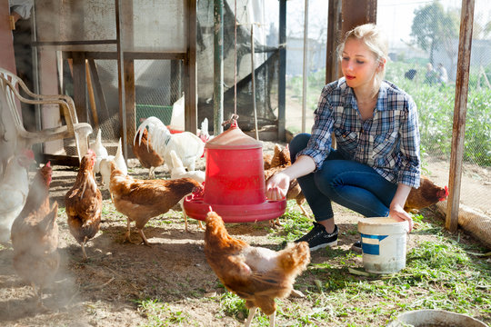 Young woman farmer caring for poultry
