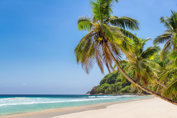 Exotic sandy beach with a palm trees and the turquoise sea on Seychelles.