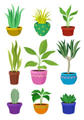 Collection of house plants in colorful pots.