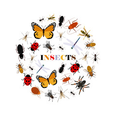 Flat insects vector icons in round shape isolated on white background. Illustration of insect bug, bee and butterfly