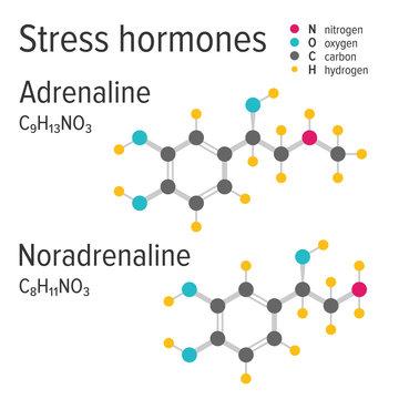 Adrenaline and noradrenaline vector chemical formulas. Stress harmones. Chemical molecular model.