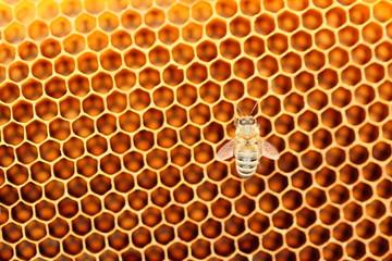 eine Biene auf der wabe