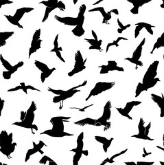 Seamless Flying Birds Silhouettes. Animals Detailed Pattern Black On White Background. Freehand Drawing. Vector. Illustration. Isolated On White Background.