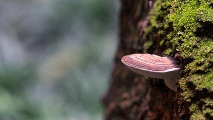 Mushrooms that leave on the tree