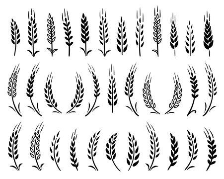 set of black hand drawn wheat ears icons